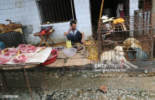 There are about several stalls in every wet market in Guilin, trading in different species of dogs - live and dead - including Chinese rural dogs and...