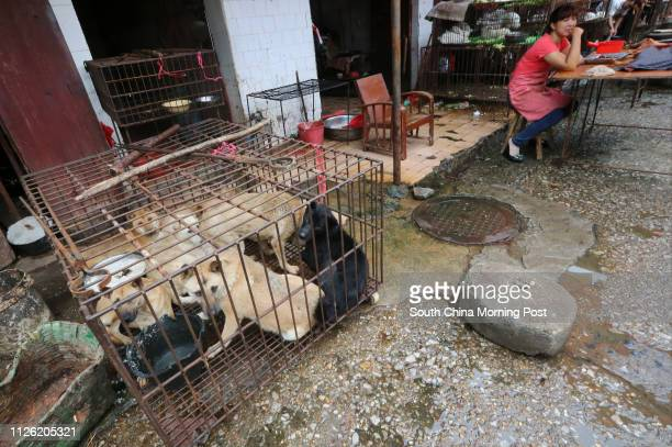 There are about several stalls in every wet market in Guilin trading in different species of dogs live and dead including Chinese rural dogs and...