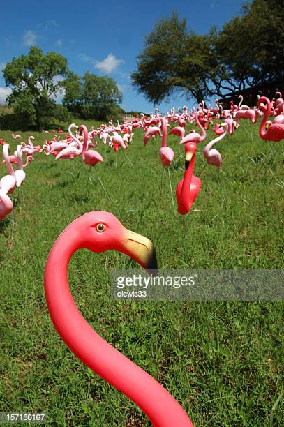 there goes the neighborhood - again! - ugly bird stock pictures, royalty-free photos & images