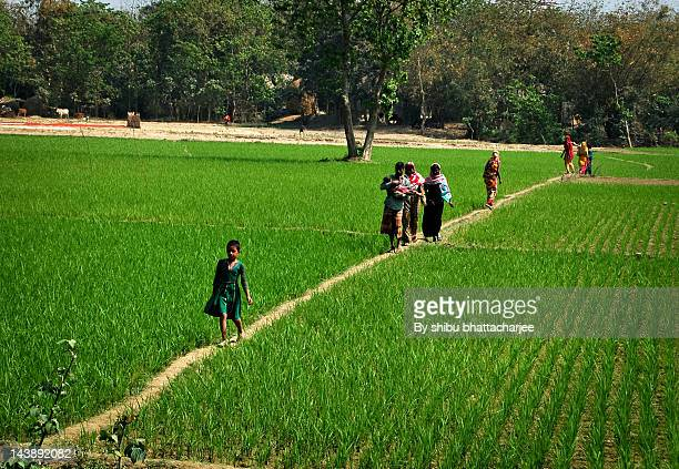 there is no way they - bangladesh village stock photos and pictures