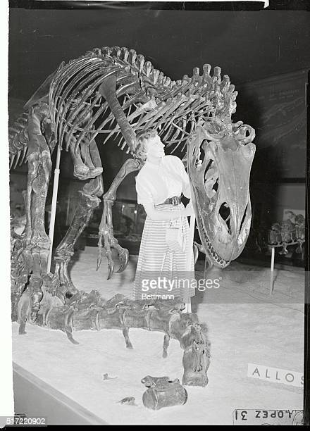 there is nothing like looking at an Allosaurus from the inside out especially when the giant reptile is only a skeleton handsomely mounted in the...