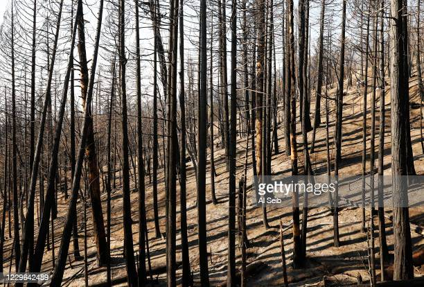 There were no sounds of life on the fire-ravaged mountainside in the McIntyre Grove, one of the monument areas hardest hit by the Castle fire. Eric...