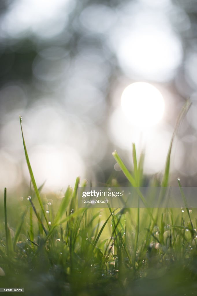 There's Bokeh Everywhere : Stock Photo