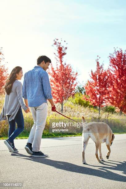 There's nothing like a recreational walk with our labbie