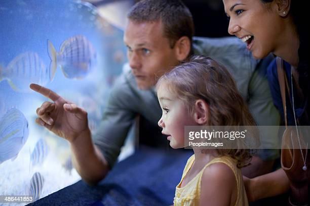 Il y a tellement de choses à découvrir à l'aquarium