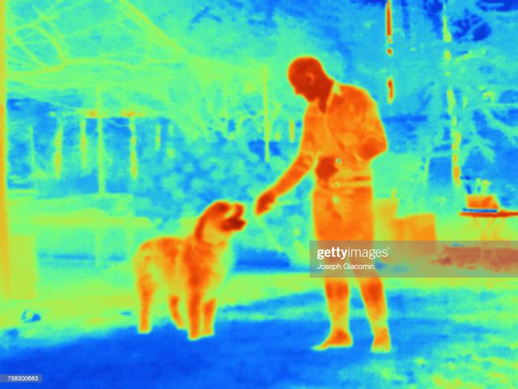 Thermal image of man with dog : Stock Photo