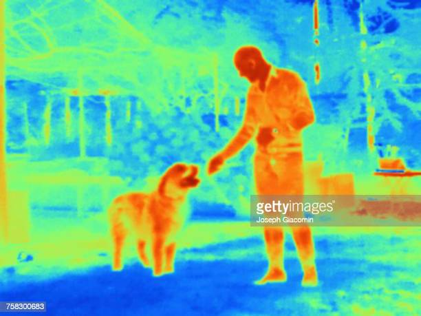 thermal image of man with dog - infrarosso foto e immagini stock