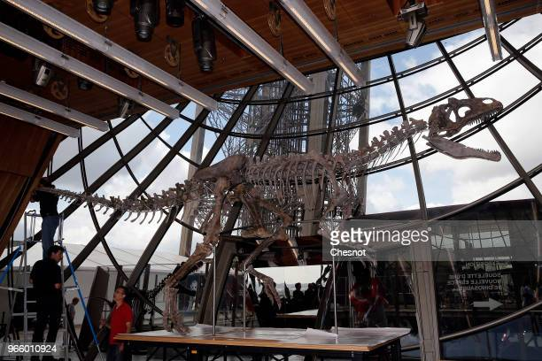 A theropod a carnivorous dinosaur skeleton is displayed during his installation on the first floor of the Eiffel Tower prior to be sold on auction by...