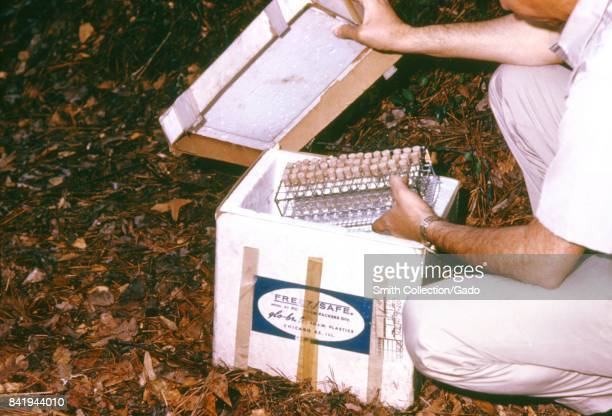 These blood specimens collected from vertebrates during an arbovirus field study are being stored on ice 1974 These specimens were transported back...
