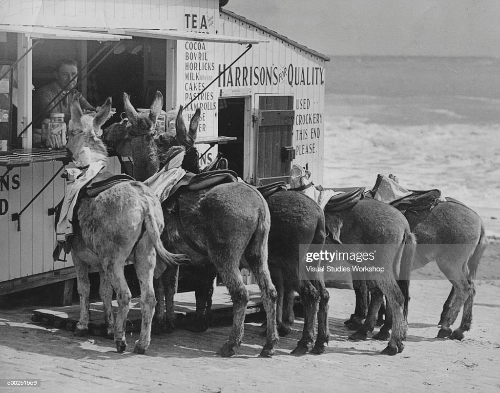 Donkeys Gather At Tea Stall : News Photo