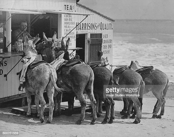 These donkeys have made a habit of stopping at a tea stall on their way down to the beach every morning often receiving all the stale cakes left over...