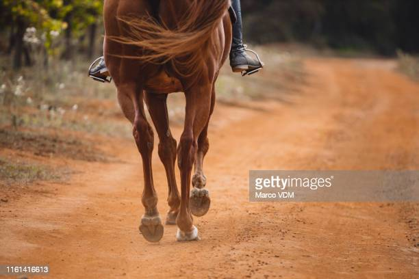 these hooves were made for trotting - boot stock pictures, royalty-free photos & images