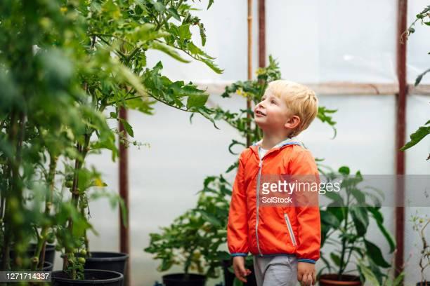 これらの植物はとても大きいです - 植物園 ストックフォトと画像