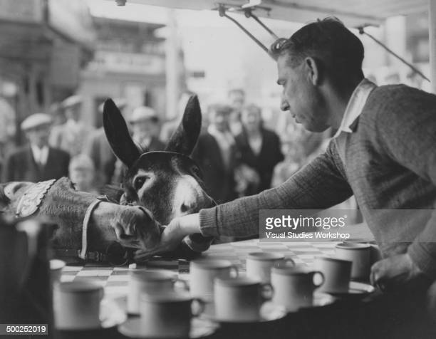 These two donkeys are regular customers for the owner of this refreshment stall who usually feeds them scraps of food every day as they make their...