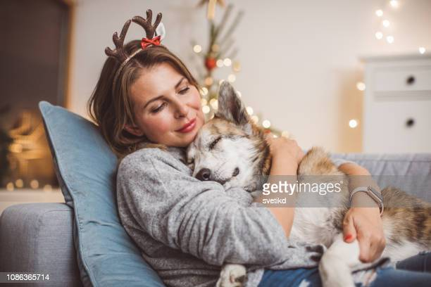 they just love christmas - christmas dog stock pictures, royalty-free photos & images