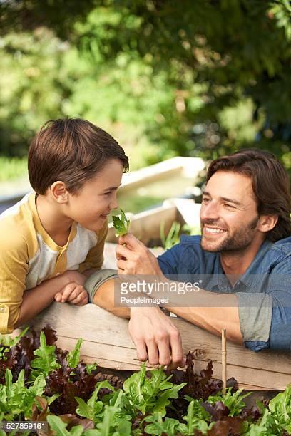 sie lieben gardening together - hoch position stock-fotos und bilder