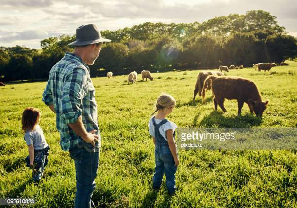 they love watching all the animals graze - agriculture stock pictures, royalty-free photos & images