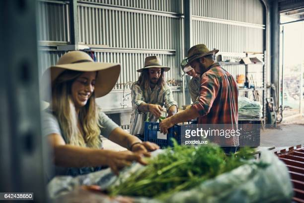 they've had a great harvest so far - farm worker stock pictures, royalty-free photos & images