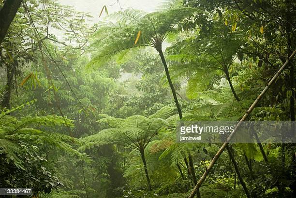 Épaisse couverture de la jungle de la forêt tropicale dense et Fougères