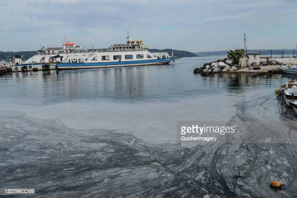 Thick layer of mucilage, also known as 'sea snot', covers the Marmara Sea, posing a threat to marine life and the fishing industry in Canakkale,...