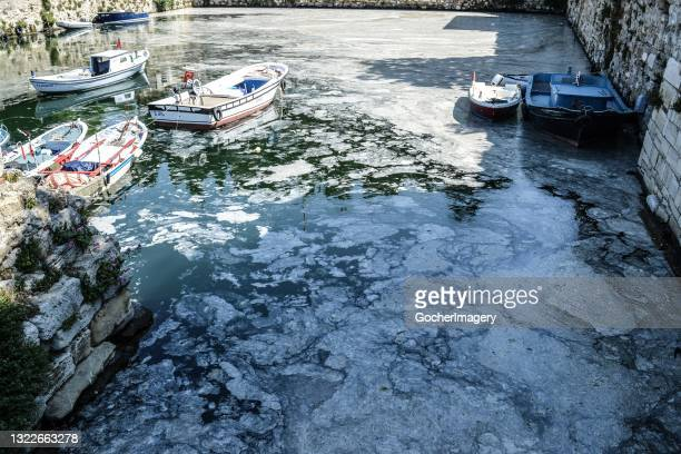 Thick layer of mucilage, also known as 'sea snot', covers the Marmara Sea, posing a threat to marine life and the fishing industry in Gallipoli,...