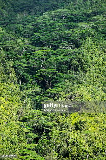 Thick mountain forest on Mahe Island, Seychelles