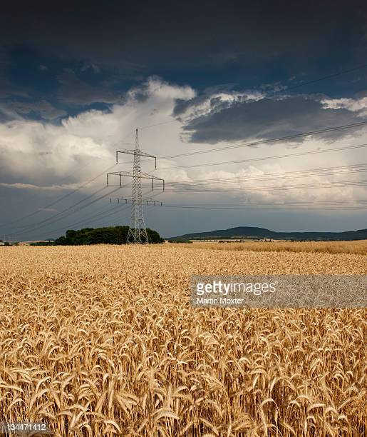 Thick storm clouds gathering over a field of rye, Bavaria, Germany, Europe