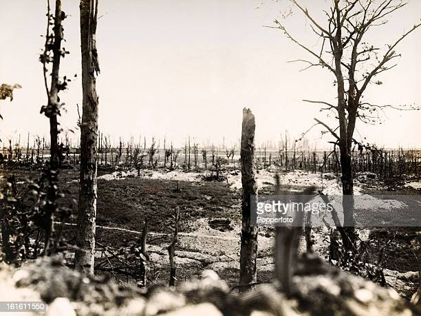 Thiepval Wood in Northern France, photographed soon after the end of World War One, circa March 1919. This image is from a series documenting the...