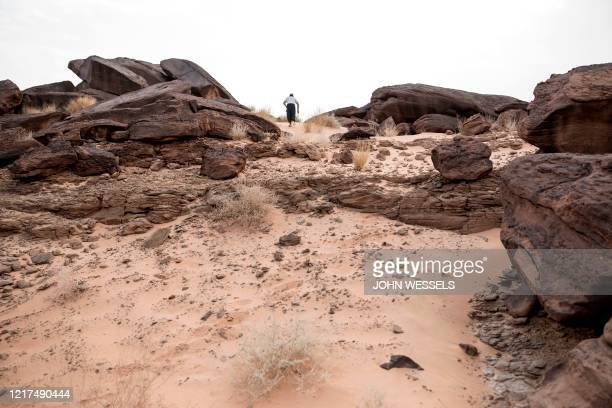 Thierry Tillet a Saharan Archeologist and explorer walks searches for fossilised otter excrement in a band of rocks between the towns of Tichitt and...