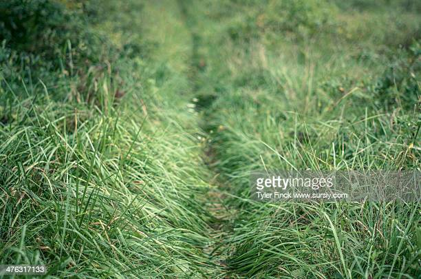 thin green trail - sursly stock pictures, royalty-free photos & images