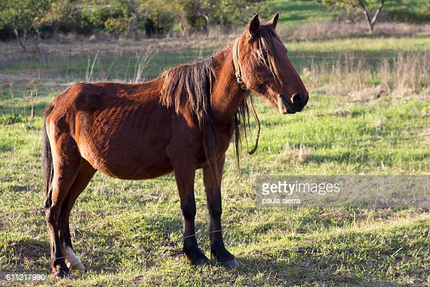 thin horse - ugly horses stock photos and pictures
