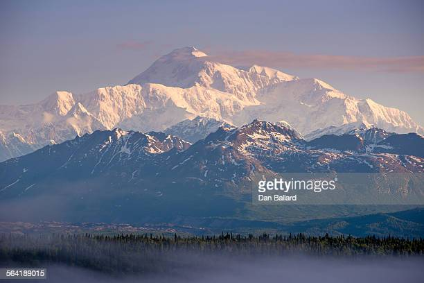 a thin layer of fog blanketed over evergreens with mountains in the background at sunset. denali national park, alaska, usa. - dan peak stock photos and pictures
