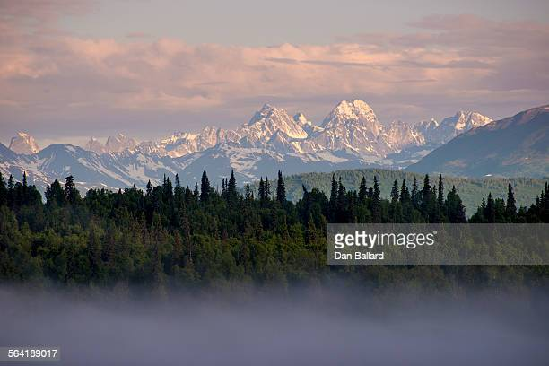 a thin layer of fog blanketed over evergreens with mountains in the background at sunset. denali national park, alaska, usa. - paisajes de alaska fotografías e imágenes de stock
