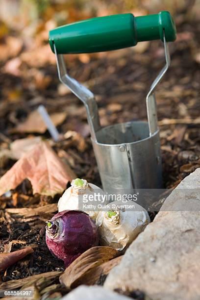 things you are thankful for - blumenzwiebel stock-fotos und bilder
