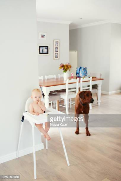 i think he's waiting for me to share my snacks - dog eats out girl stock pictures, royalty-free photos & images