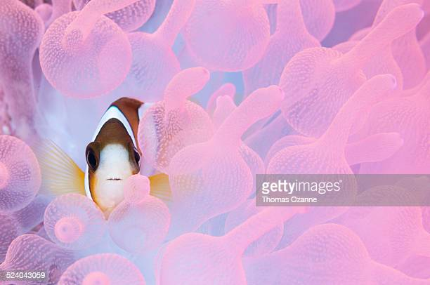 think pink - symbiotic relationship stock pictures, royalty-free photos & images