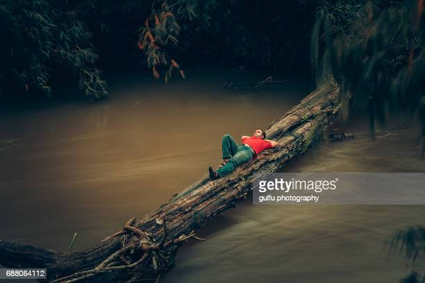 thinking man - fallen tree stock pictures, royalty-free photos & images