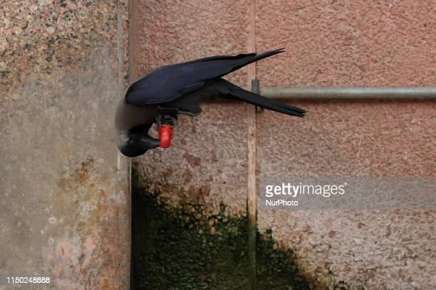 Thirsty crow drinks water from a Tap on a hot summer day in New Delhi on 15, June 2019