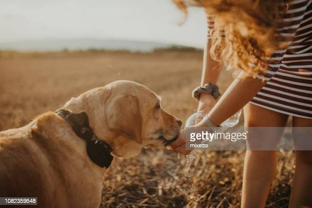 thirsty dog - thirsty stock pictures, royalty-free photos & images