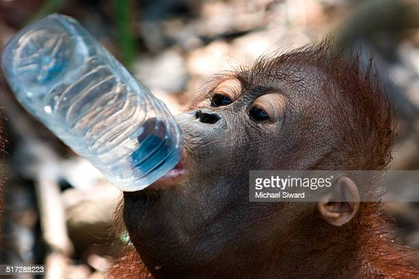 thirsty - michael siward stock pictures, royalty-free photos & images
