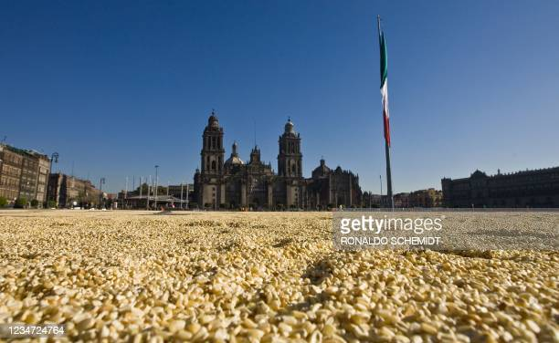 Thirty-five tons of corn put by Greenpace activists at Mexico City's Zocalo Square as a protest against the sowing of transgenic corn, form a map of...