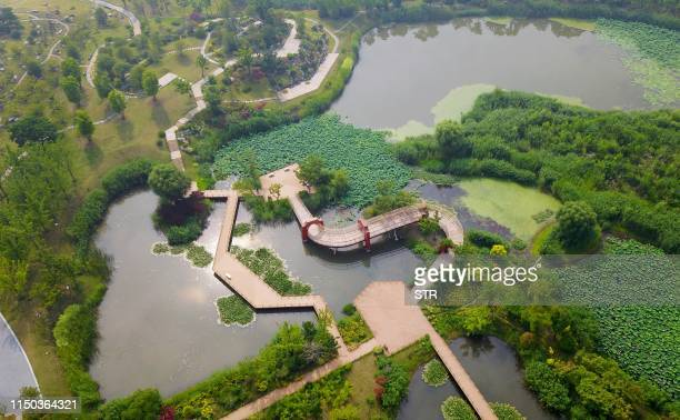 This aerial image shows walkways beside lotus ponds at the Sanwan scenic area beside the ancient canal in Yangzhou in China's eastern Jiangsu...
