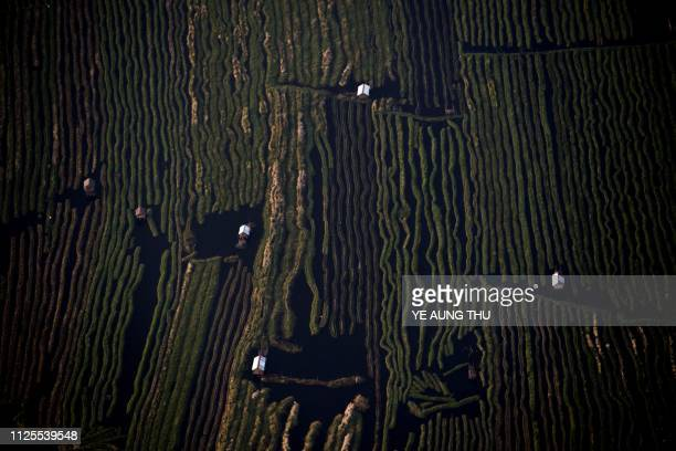 This aerial photo taken from a hot air balloon shows vegetable plantations and traditional houses on stilts on Inle lake in Shan State is seen on...