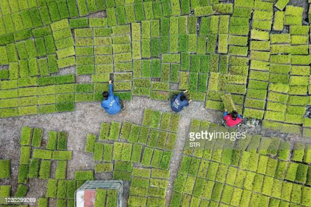 This aerial photo taken on April 13, 2021 shows farmers transferring rice seedling at a seedling base in Jianhe in China's southwestern Guizhou...
