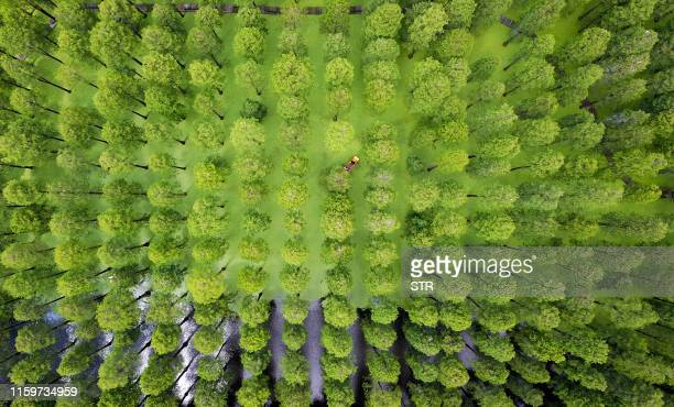 TOPSHOT This aerial photo taken on August 3 2019 shows tourists riding a boat among trees at Luyanghu Lake wetland park in Yangzhou in China's...