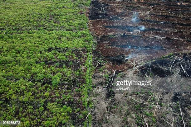 This aerial photo taken on March 3 2018 shows a protected area of the Rawa Singkil wildlife reserve as part of the Leuser Ecosystem in Trumon South...