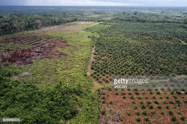 This aerial photo taken on March 3 2018 shows an palm oil plantation in a protected area of the Rawa Singkil wildlife reserve as part of the Leuser...
