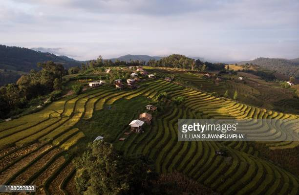 TOPSHOT This aerial photo taken on November 7 2019 shows rice terraces in the village of Mae Rim in the northern Thai province of Chiang Mai Battling...
