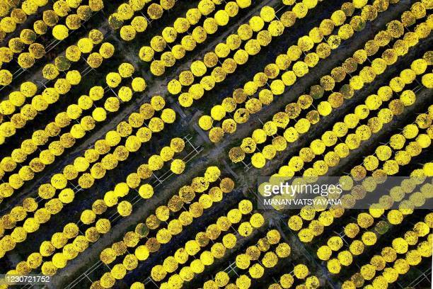 This aerial photograph shows a flowers in a field at the Sa Dec flower village, largest flower supplier in southern Vietnam's Mekong Delta region on...