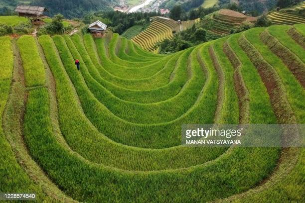 This aerial photograph shows terraced rice fields in northern Vietnam's Mu Cang Chai district on September 18, 2020.